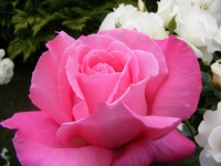 00070-Roses_etc_022.jpg