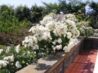 00090-July_Garden_13_004.jpg