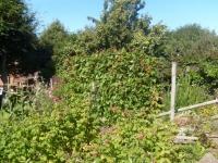 00170-autumn_garden_09_001.jpg