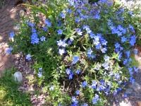00150-garden_May_10_017.jpg