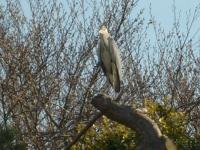 00030-heron_and_fish_ponds_011.jpg