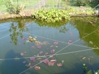 00140-heron_and_fish_ponds_025.jpg