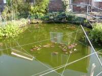 00150-heron_and_fish_ponds_026.jpg
