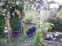 00230-May_garden_10_007.jpg