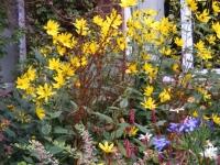 00030-10_Aug_garden_.jpg