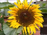 00090-Sept_garden_004.jpg