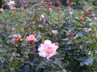 00100-Sept_garden_039.jpg
