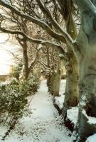 00100-Sunny_snow_path.jpg