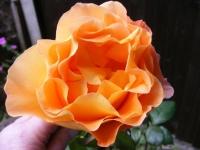 00020-Roses_etc_014.jpg